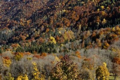 Automne forêt